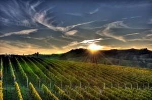 italia-vinuri11