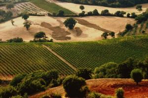 italia-vinuri5